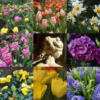 flowercollage1.jpg