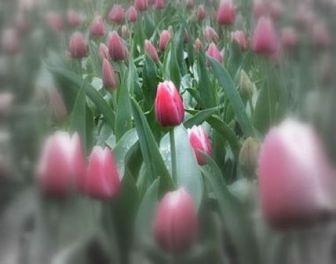 spring2006-026.jpg