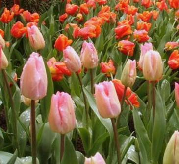 spring2006-027.jpg