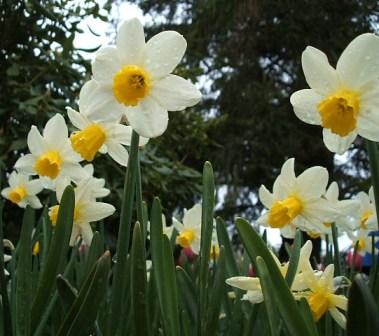 spring2006-038.jpg