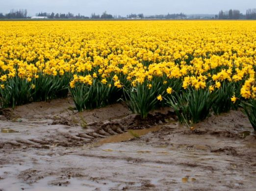 spring2006-021.jpg