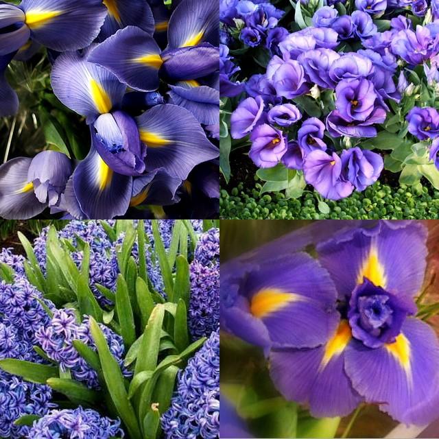 purples.jpg
