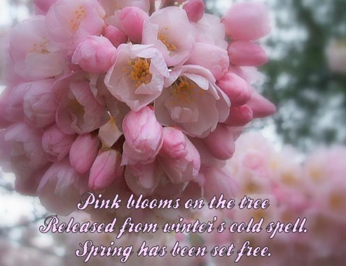 haiku poems about flowers - photo #35