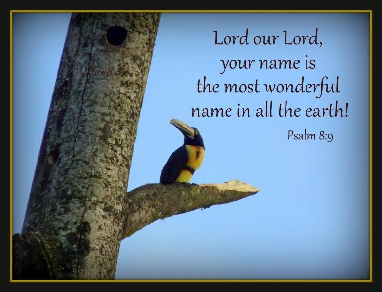 Psalm 8 9